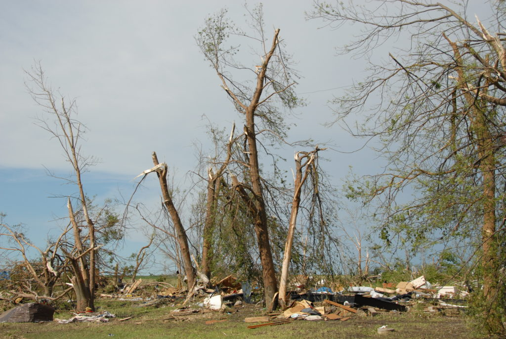 Trees that have been snapped off and broken by a tornado